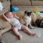Animais de Estimação x Crianças -Sim ou Não ?