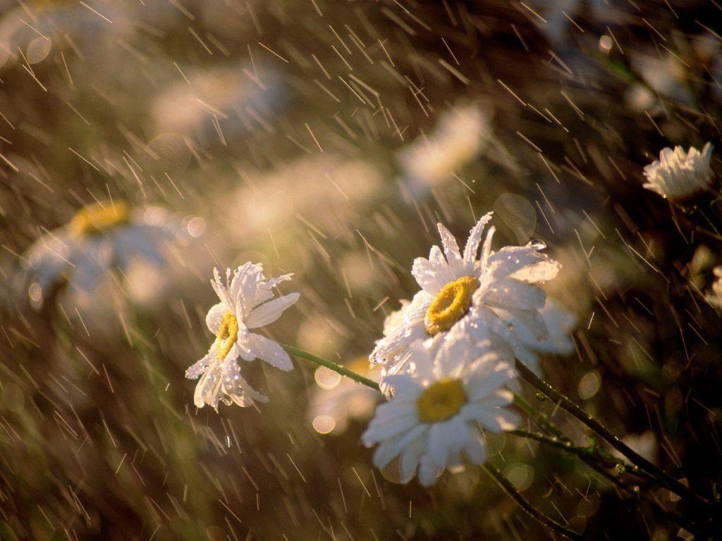 um-dia-de -chuva