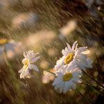Um Dia de Chuva…