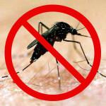 CHIKUNGUNYA – A Prima da Dengue que está chegando ….